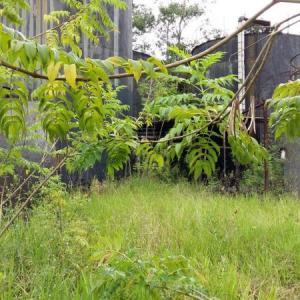 Laudo de caracterização ambiental